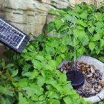 Napelemes mini szökőkút és madáritató