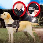 KUTYAHÁM EXTRA KÉNYELMES SPORT KIALAKÍTÁS / SPORTS DOG HARNESS SET /