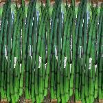 Műanyag szúrható anyósnyelv 67cm