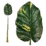 Trópusi műlevél  113cm