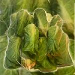 Akasztható saláta dekoráció